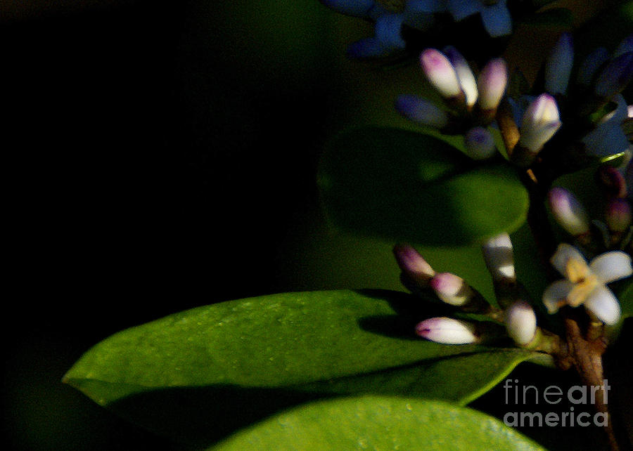 Plant Photograph - Caught Between Shadow And Light by Linda Shafer