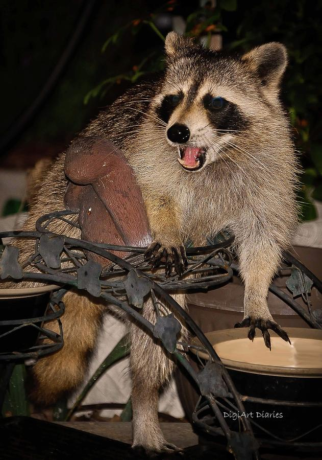 Raccoon Photograph - Caught by DigiArt Diaries by Vicky B Fuller