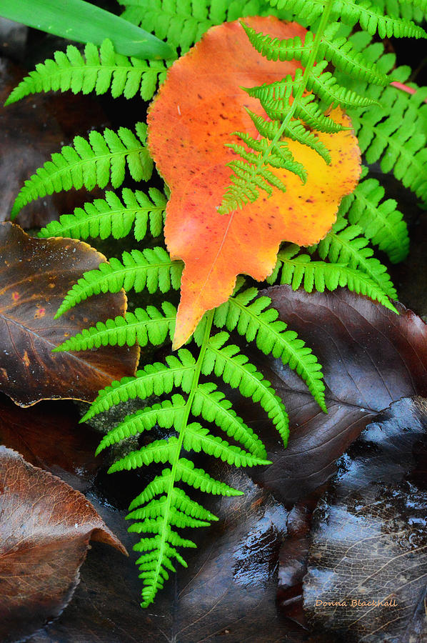 Fern Photograph - Caught In The Act by Donna Blackhall