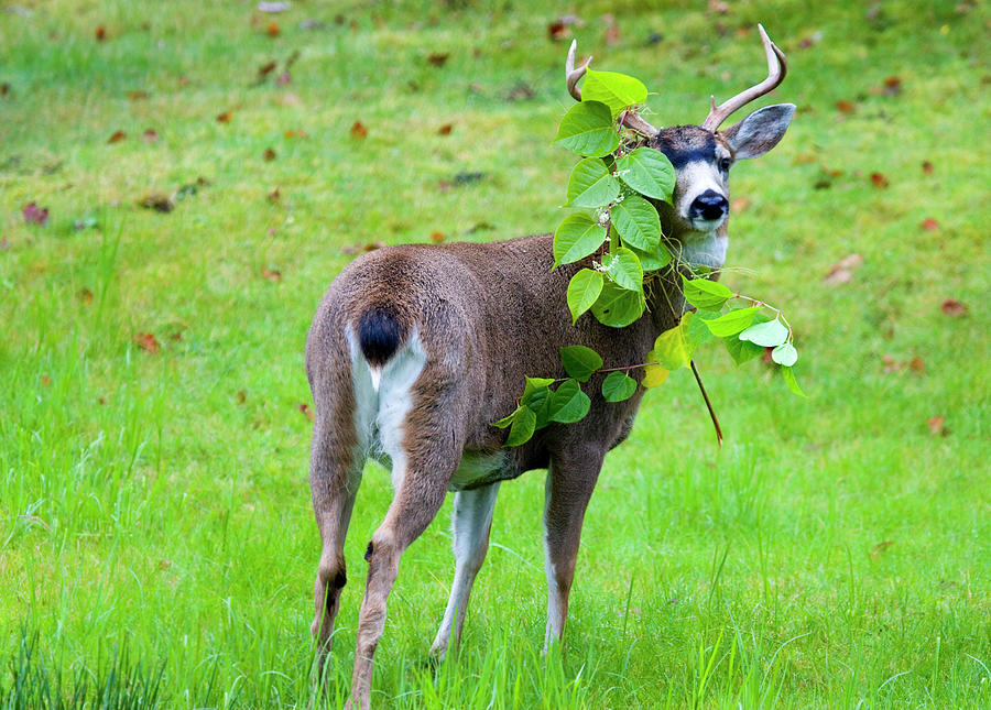 Buck Photograph - Caught In The Act by Mike  Dawson