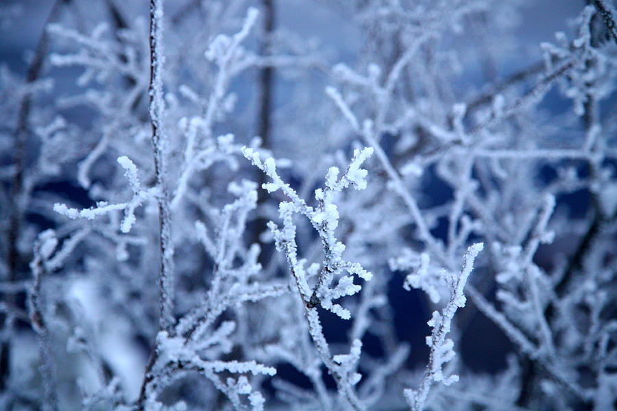 Landscape Photograph - Caught In The Ice by Jennilyn Benedicto