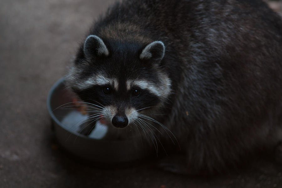 Animal Photograph - Caught Me by Craig Hosterman