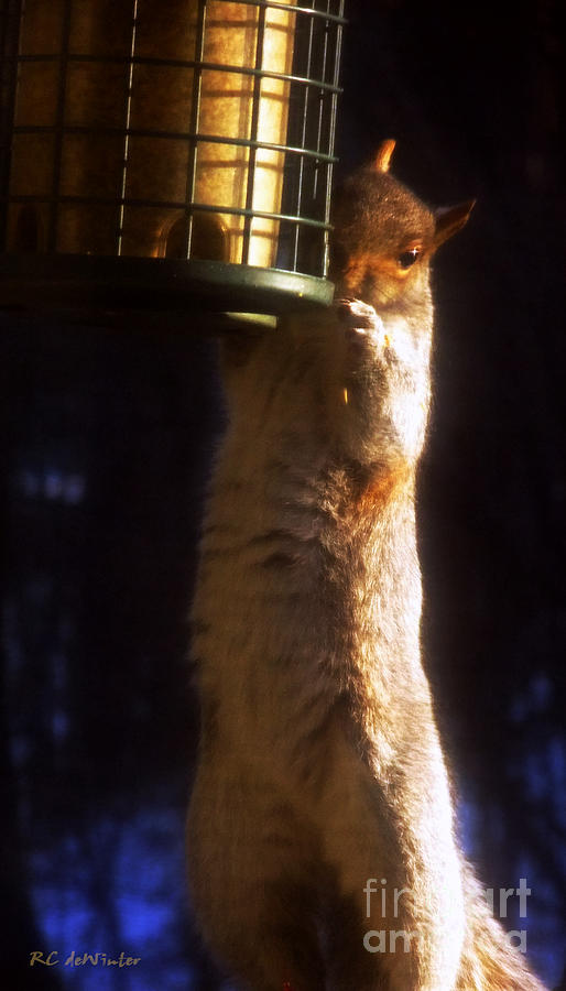 Squirrel Photograph - Caught Red-handed by RC DeWinter