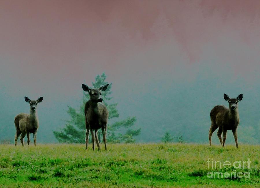 Deer Photograph - Cautious Neighbors by JoAnn SkyWatcher