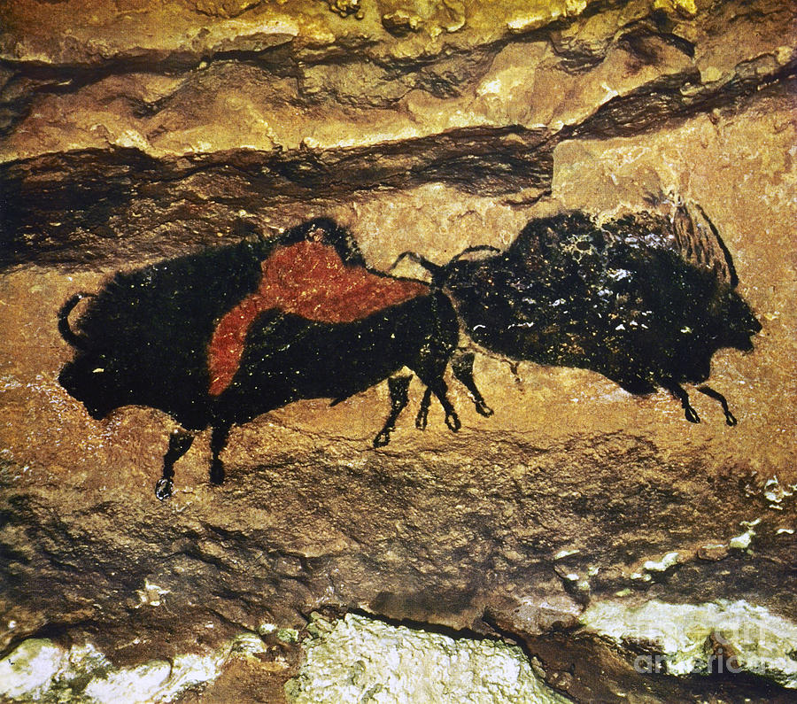 Animal Photograph - Cave Art: Bison by Granger