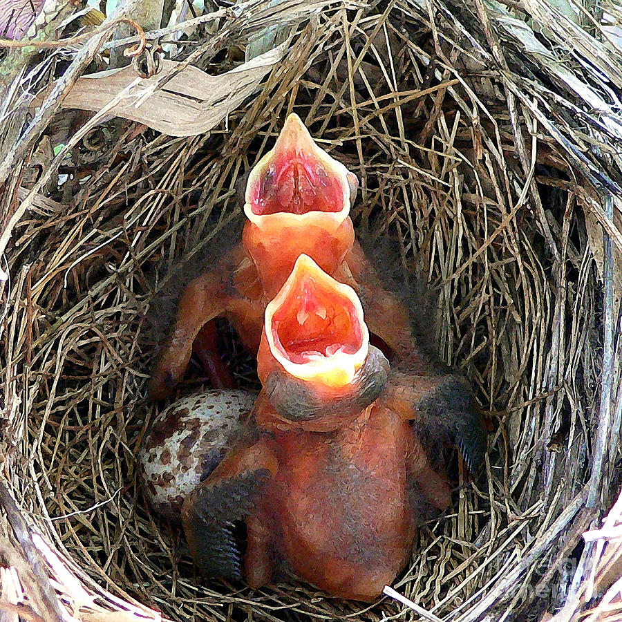 Cardinal Photograph - Cavernous Cardinals by Al Powell Photography USA