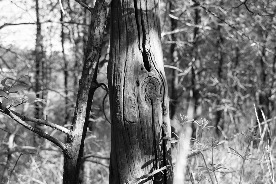 Old Fence Photograph - Cedar Fence Post by WD Stalcup