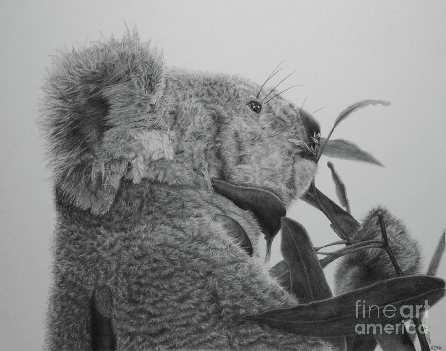 Koala Painting - Ceduna by Jennifer Watson