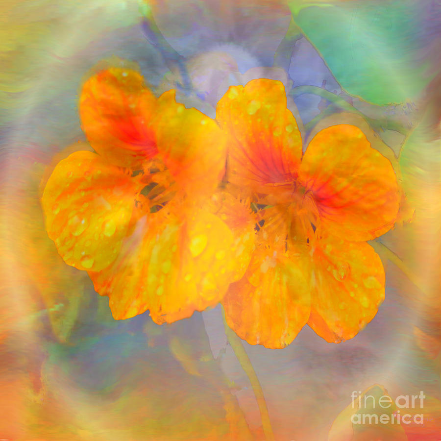 Nasturtiums Painting - Celebration Of Life. by Glenyss Bourne