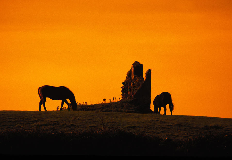 Horse Photograph - Celtic Horses At Sunset by Carl Purcell