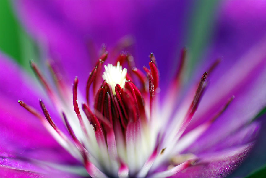Lavender Flower Photograph - Center Of Attention  by Don  Wright