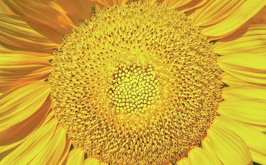 CENTER OF THE SUN by Josh Spengler