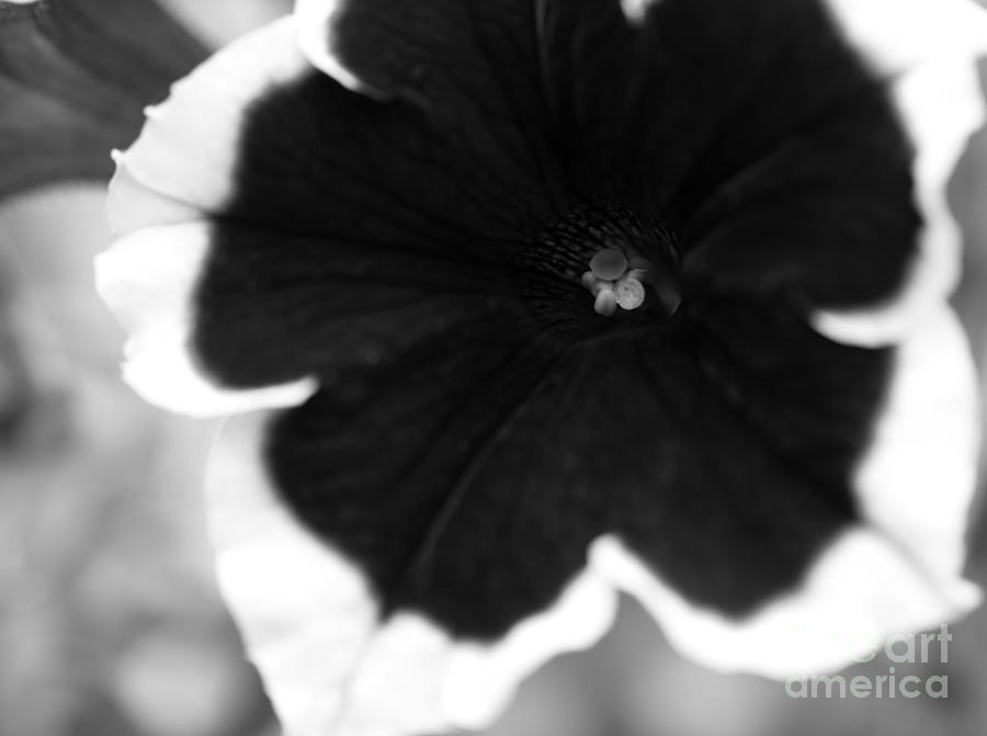 Floral Photograph - Centered by Amanda Barcon