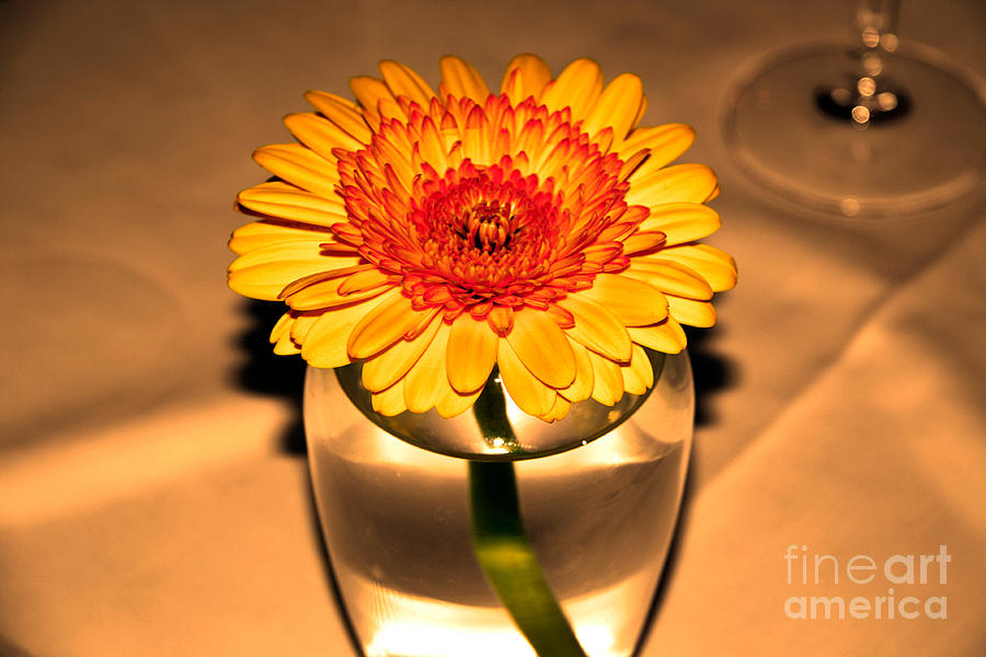 Flower Photograph - Centerpiece by Wendy Mogul