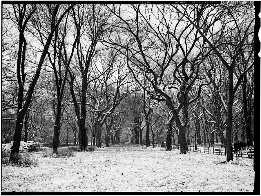 Ny Photograph - Central Park 1 by Wayne Gill