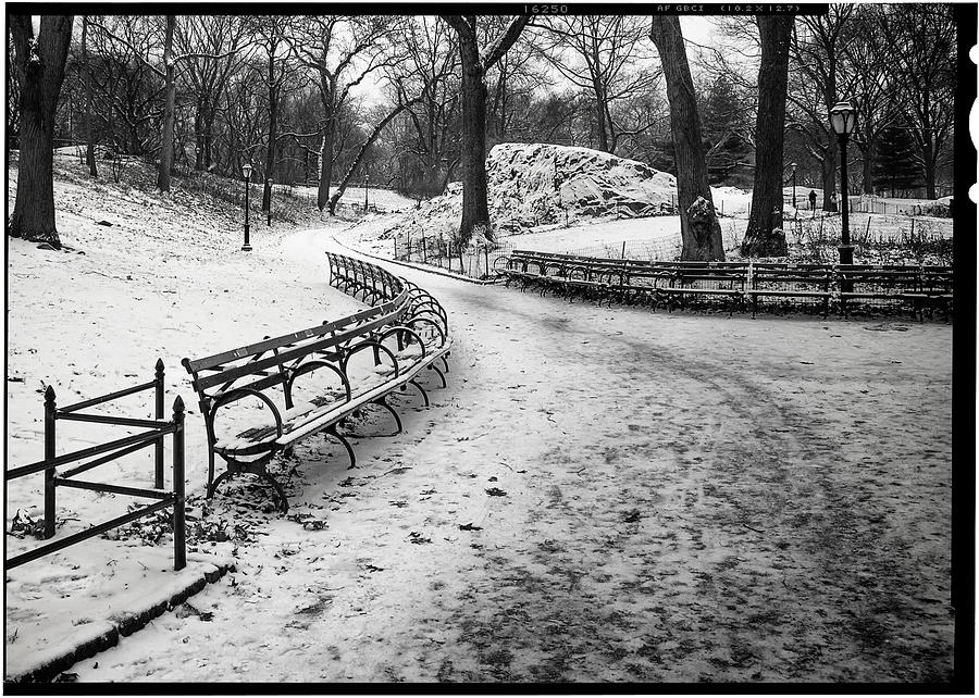 Ny Photograph - Central Park 3 by Wayne Gill