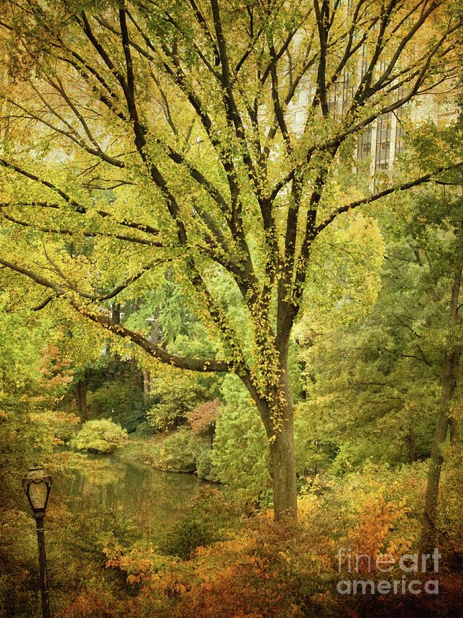 Central Park Photograph - Central Park In Autumn Texture 5 by Dorothy Lee