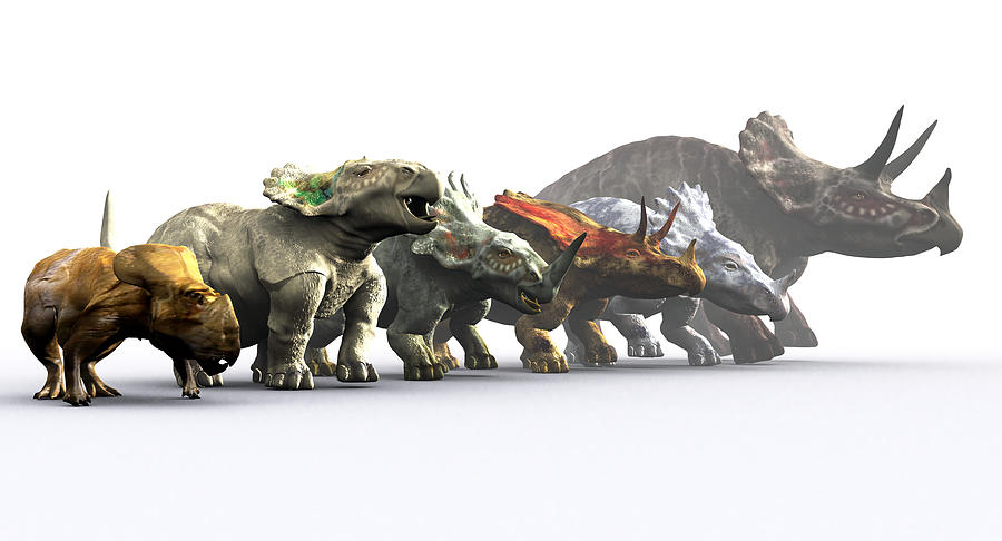 Styracosaurus Photograph - Ceratopsian Dinosaurs by Christian Darkin