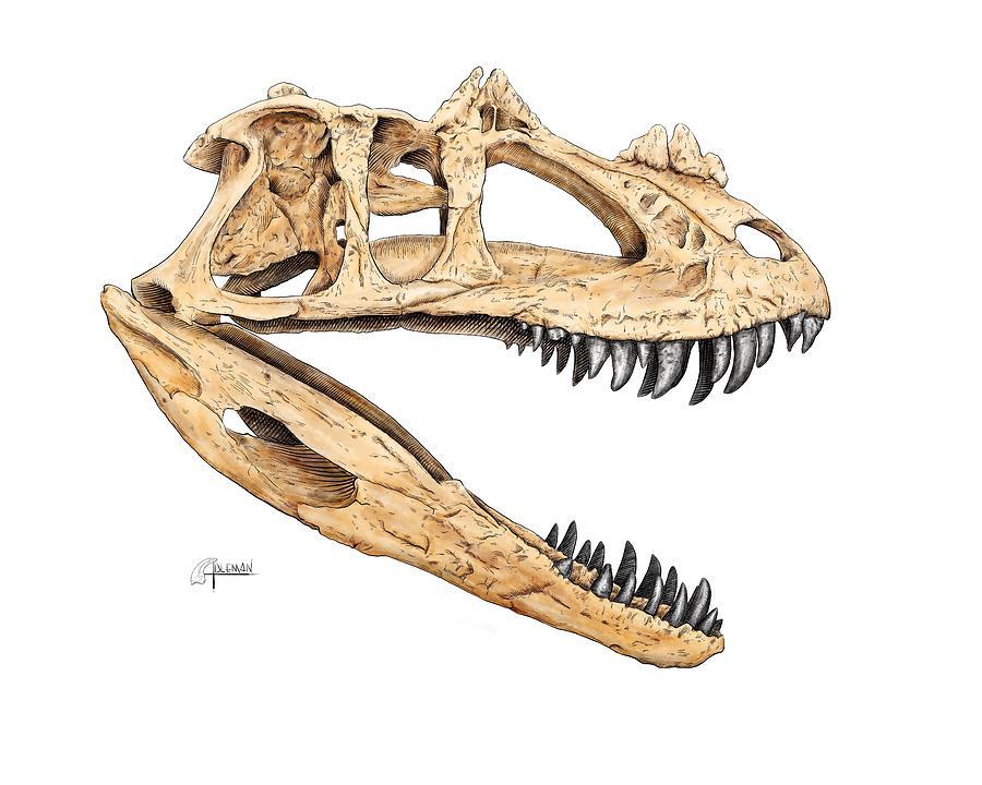 Ceratosaur Skull by Rick Adleman