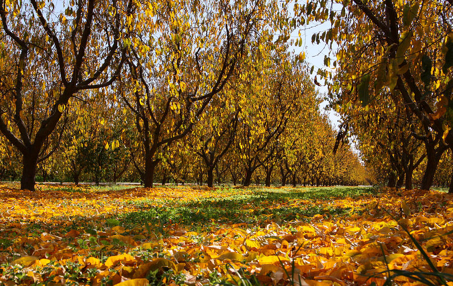 Fall Photograph - Ceres Orchard - Fall by Stephen Bonrepos