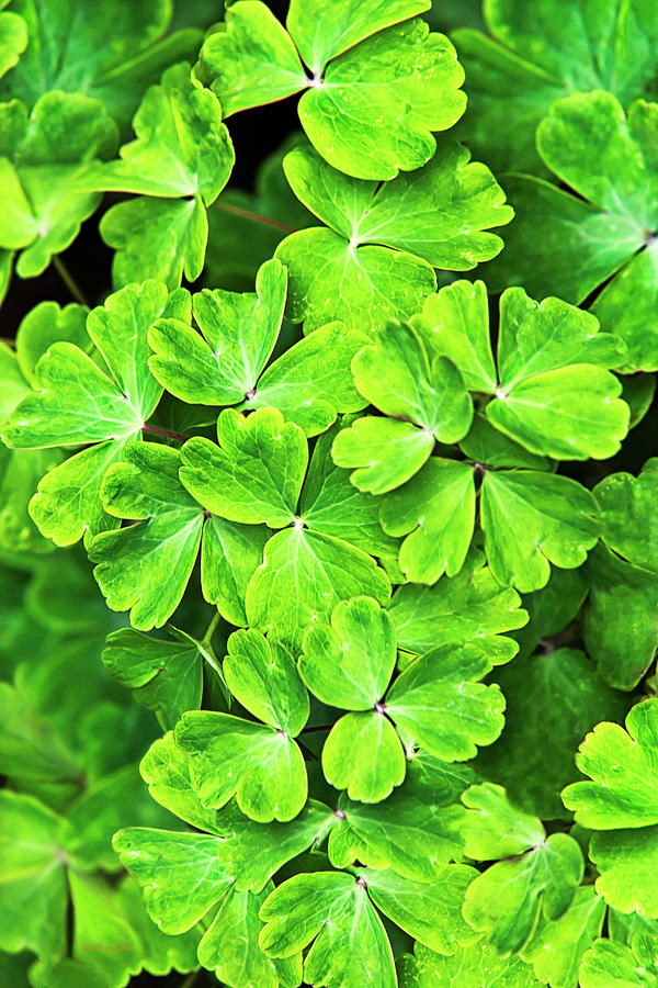 Green Photograph - Certain Green by Christina Rollo