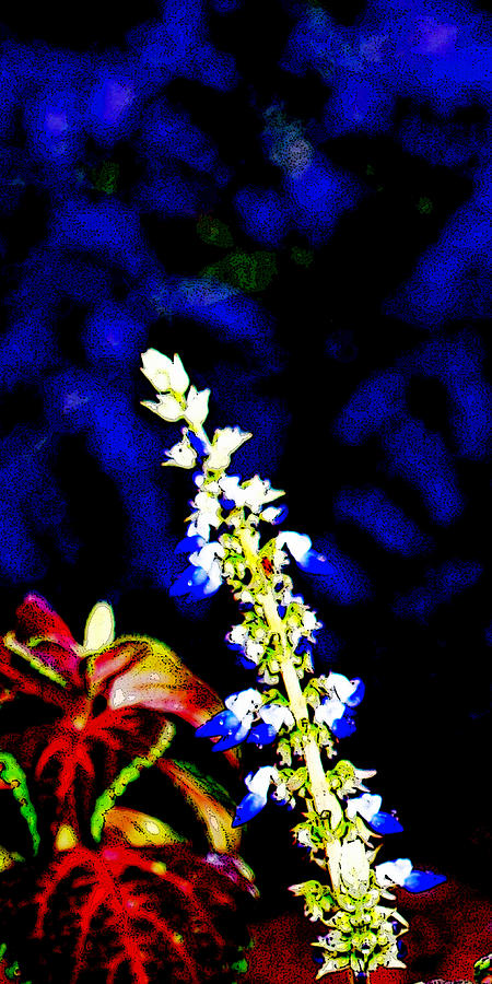 Floral Photograph - Cf1f by James Granberry