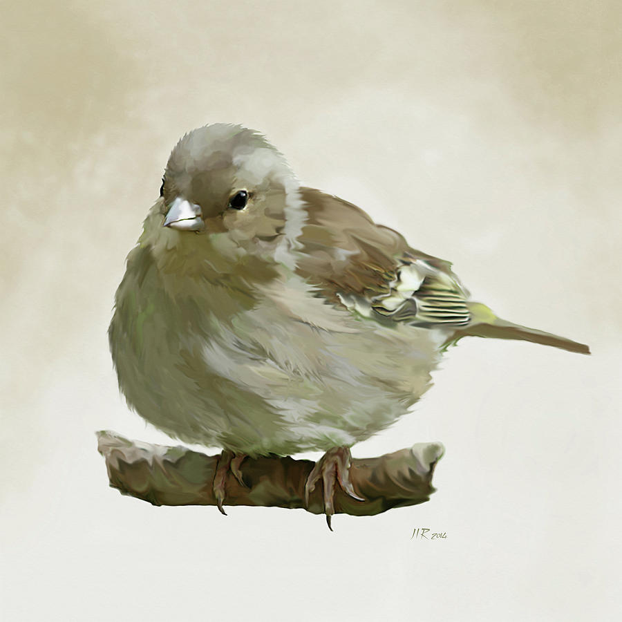 Finch Painting - Chaffinch by Bamalam  Photography
