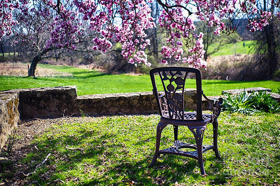 Chair In The Garden Under A Blooming Magnolia Tree Photograph By