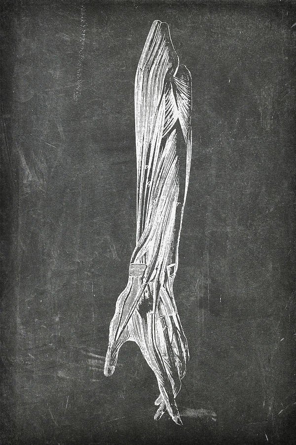 Chalkboard Anatomical Arm 2 by Renee Hong