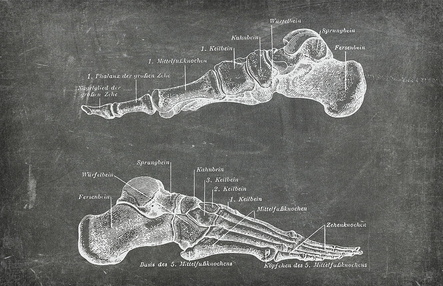 Chalkboard Anatomical Foot Medical Art by Renee Hong