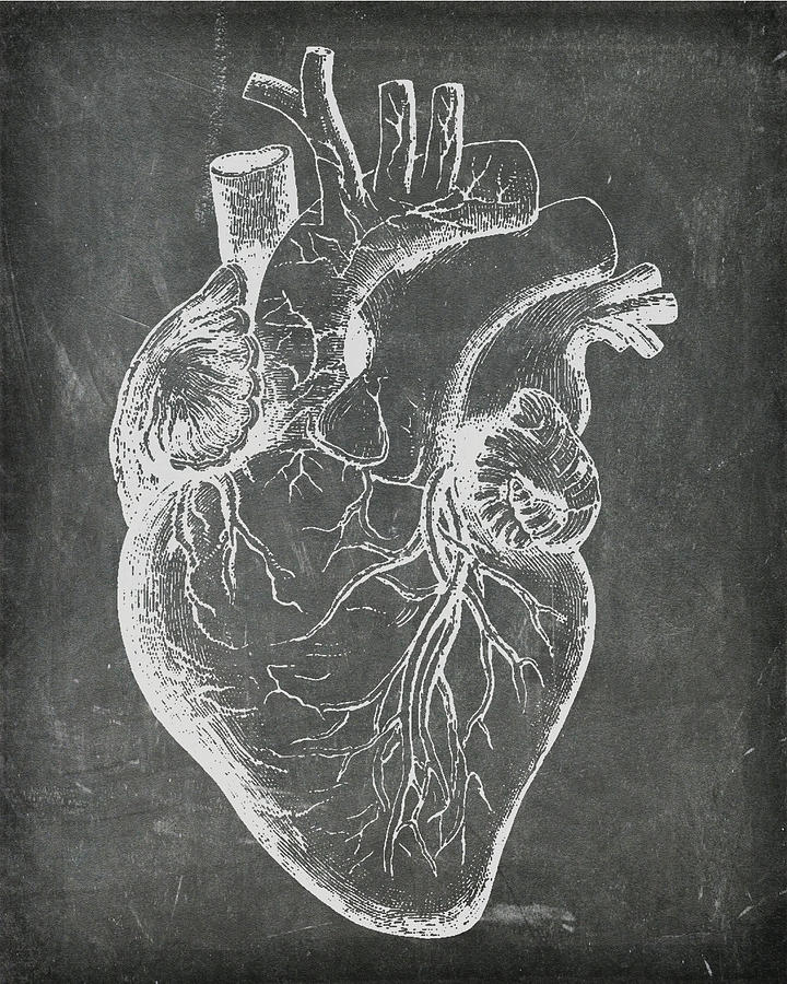 Chalkboard Anatomical Heart by Renee Hong