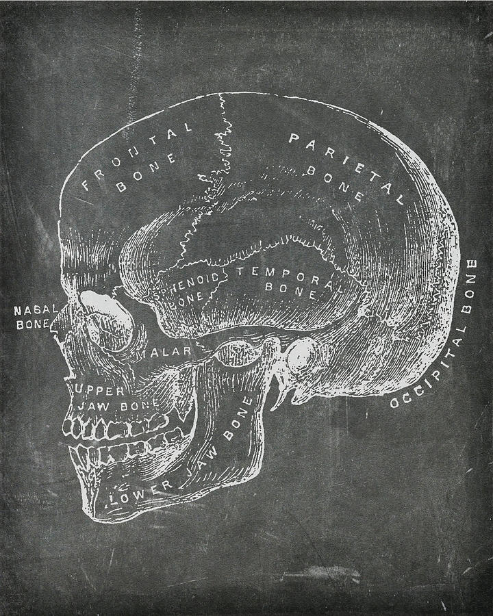 Chalkboard Anatomical Skull by Renee Hong