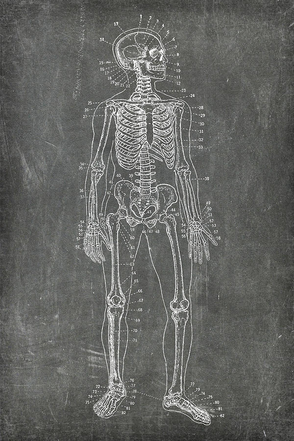 Chalkboard Skeleton Medical Art by Renee Hong
