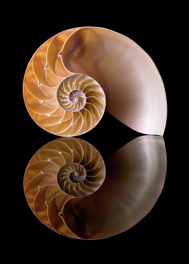 Shell Photograph - Chambered Nautilus by Jim Hughes