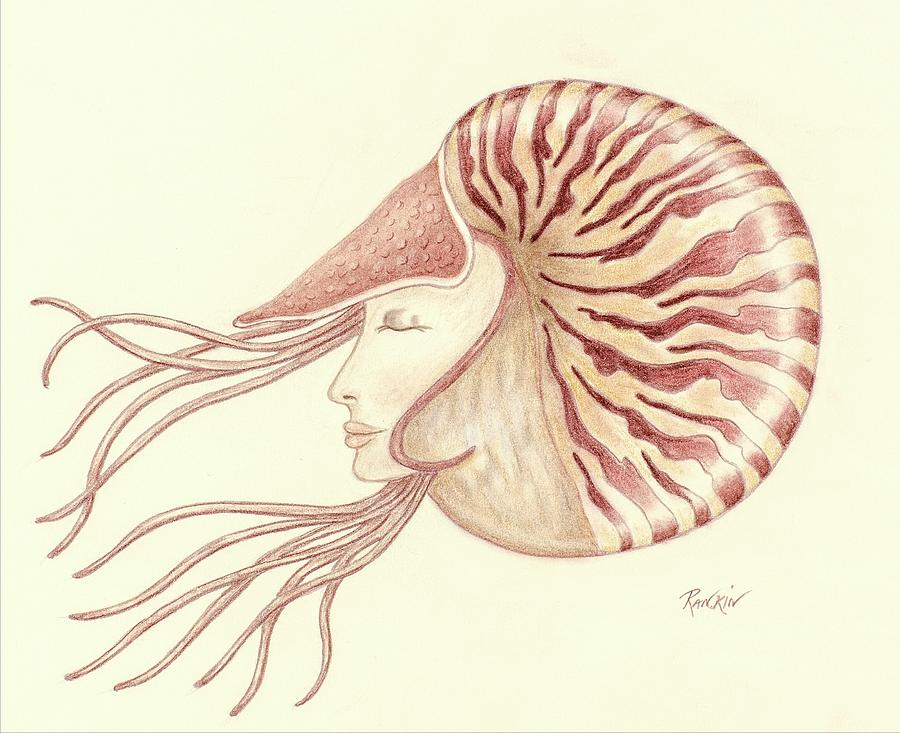 Woman Drawing - Chambered Nautilus by K S Rankin