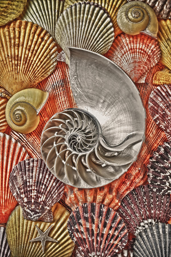 Chambered Nautilus Shell Abstract Photograph By Garry Gay