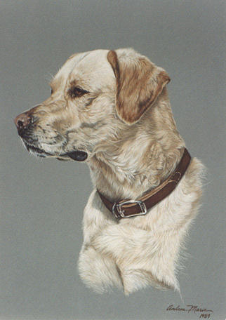 Champ Painting by Andrea Ellwood