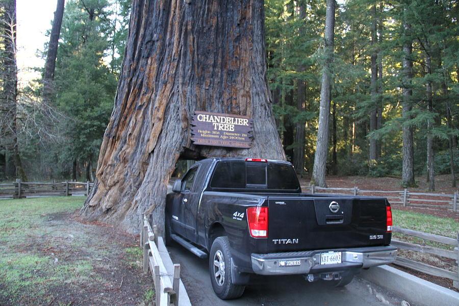 Tree Photograph by Nick Benton