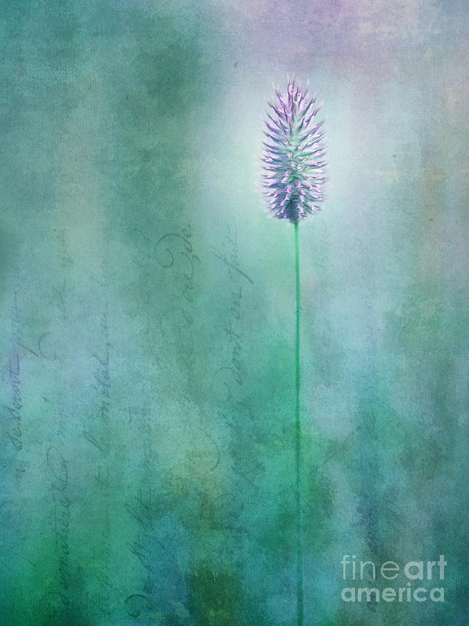 Grass Photograph - Chandelle by Priska Wettstein