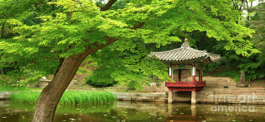 Changdeokgung Photograph - Changdeokgung Secret Garden in Spring by Matt Tilghman