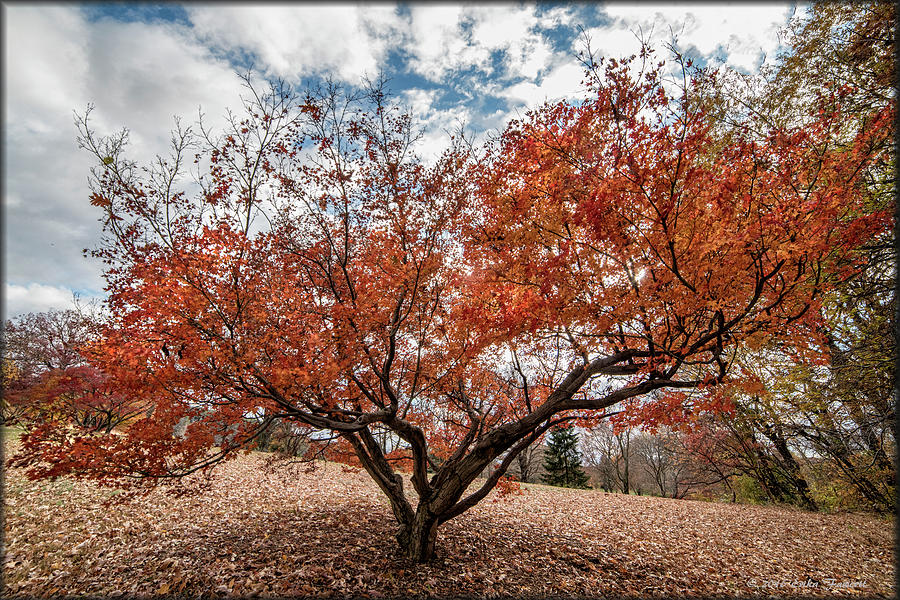 Tree Photograph - Changing Of Seasons by Erika Fawcett