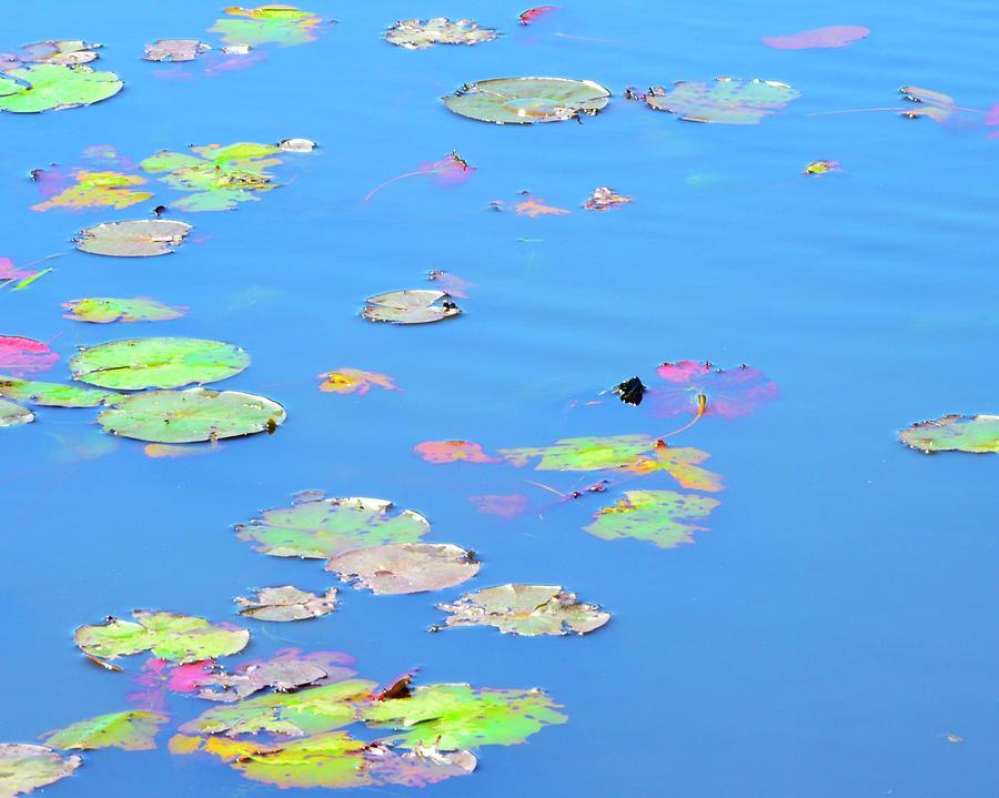 Channing Pond by Corinne Rhode