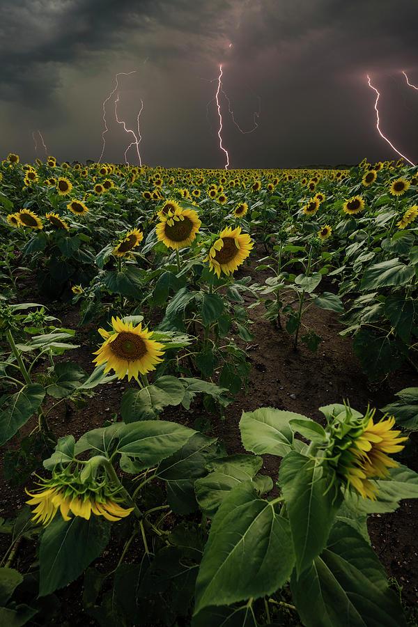 Lightning Photograph - Chaos  by Aaron J Groen