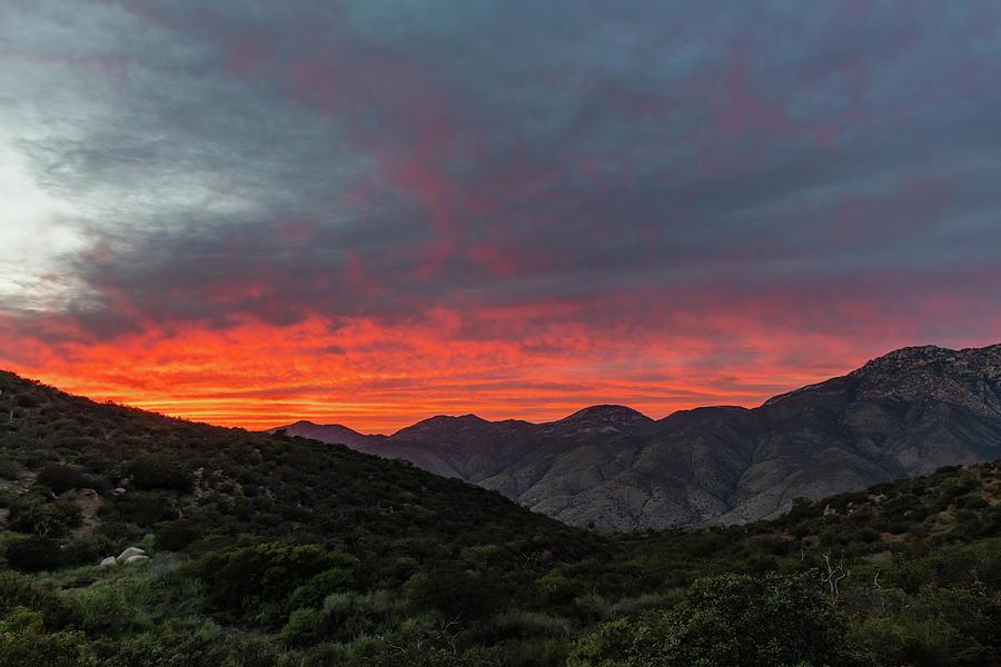 California Photograph - Chaparral Dreams by TM Schultze