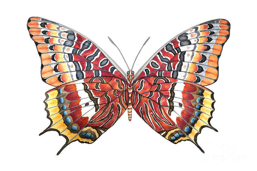 Butterfly Painting - Charaxes Butterfly by Lucy Arnold