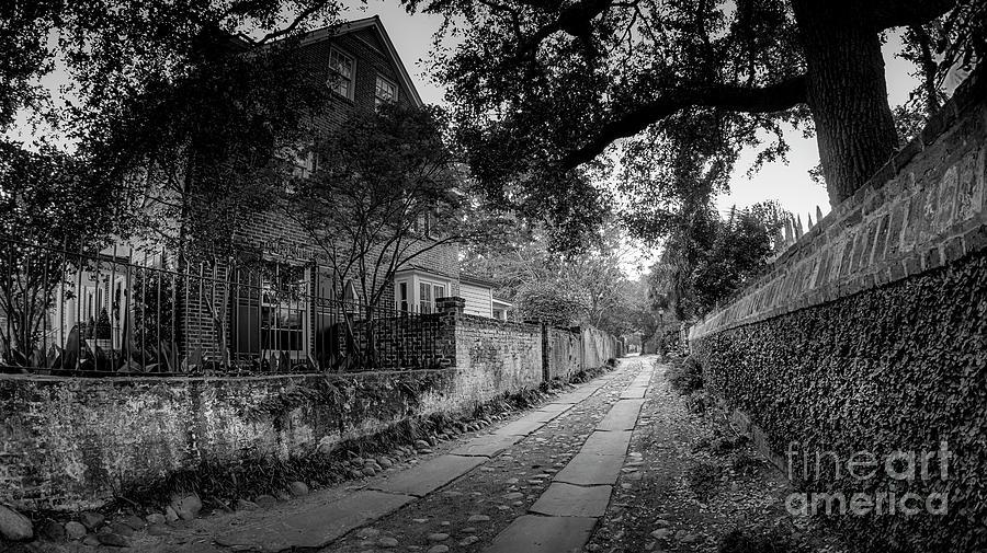 Charleston Ally Path Photograph