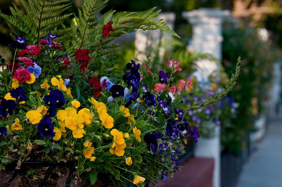 Charleston Photograph - Charleston Flower Boxes by Melissa Wyatt