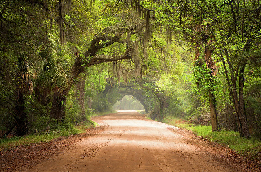 Dirt Road Photograph - Charleston Sc Edisto Island Dirt Road - The Deep South by Dave Allen