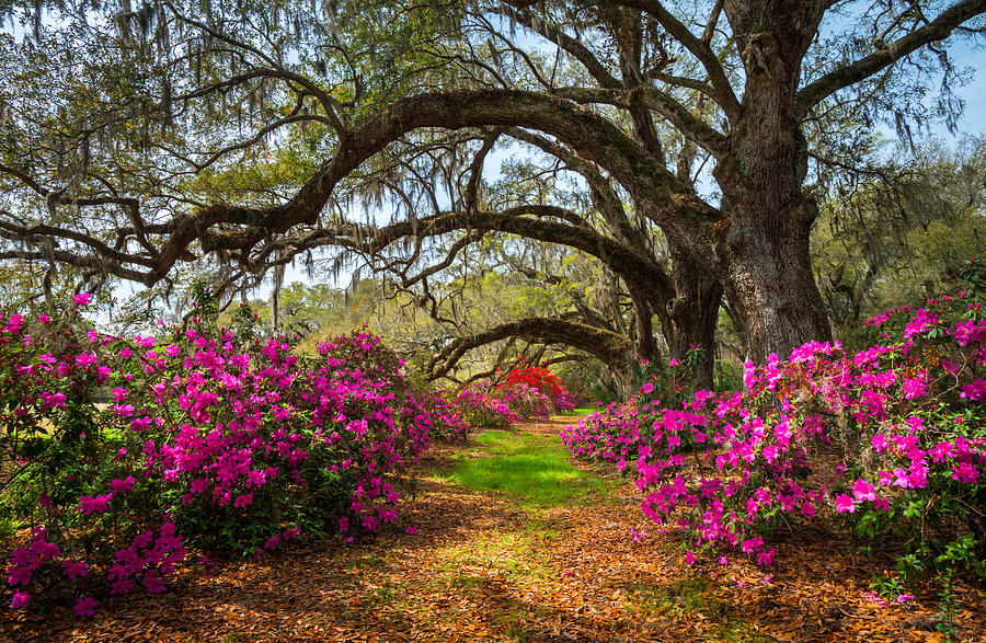 landscape photography flowers. charleston photograph sc spring flowers scenic landscape south carolina by dave allen photography o