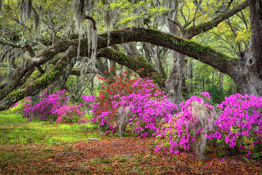 Charleston South Carolina Spring Flowers Lowcountry Landscape Photography by Dave Allen